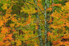 Nikon tips for autumn photography
