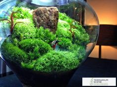 Mahmut Kırnık.480 #microjardines #GoldTerrariumIdeas Gold Terrarium, Terrarium Ideas, Micro Garden, Mini Bonsai, Moss Garden, Cactus Y Suculentas, Plant Design, Small Gardens, Deco