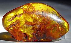 Baltic Amber ~ Baltic region Baltic Sea  Europe