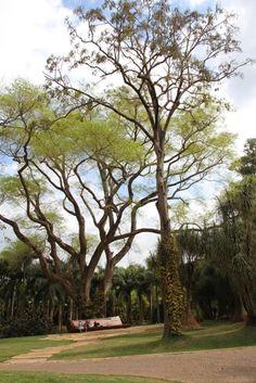 Viajando com Arte » Arquivo » O jardim museu mais lindo do mundo está no Brasil. Você conhece Inhotim?