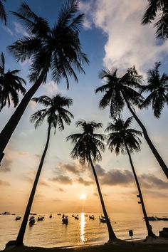 nature, ocean, palm trees, Black and white photography Black And White Beach, Black And White Pictures, Photo Xxl, Beach Photography, Nature Photography, Photography Ideas, Photography Courses, Underwater Photography, Photography Backdrops