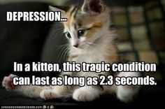 Kittens do have things that bother them, but they are not skilled at letting us know. Here's tips to tell what our kitten's mood might be. Funny Cat Jokes, Cat Memes, Funny Cats, Hilarious Quotes, Animals And Pets, Baby Animals, Funny Animals, Cute Animals, Fat Cats