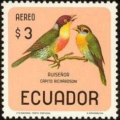 Ecuador: Eubucco richardisoni, Lemon-throated Barbet - (Capitão-de-bigode-limão)                                                                                                                                                                                 Mais