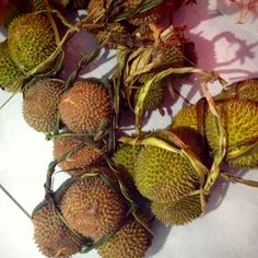 It called durian from indonesian (asia)
