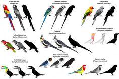 Parrots #animal #bird #collection #set #feathery #outline #silhouette #contour #vector #ornithology