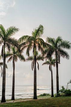 Waves breaking in Playa Avellanas, Costa Rica through a royal palm tree grove.