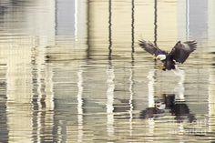 scenic eagle oil portraits - Google Search