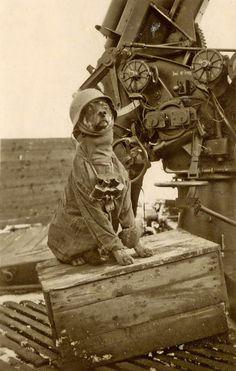 Hund mit Stahlhelm, Fernglas und Flakgeschütz 1945 [Dog with stahlhelm, binoculars and anti-aircraft gun]