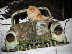 Can I drive??? by klinkekula, via Flickr