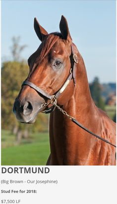 Dortmund at Bonita Farm Horses, Animals, Dortmund, Animales, Animaux, Animal, Animais, Horse