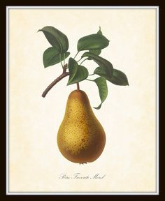 Antique Botanical Art Print French Fruit Series by BelleBotanica, $10.00