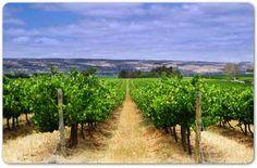 curso-de-geoestadistica-y-sistemas-de-informacion-geografica-aplicados-a-la-viticultura/