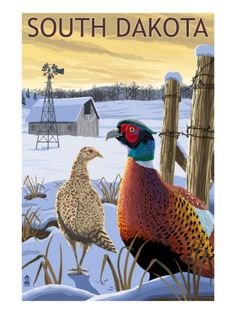 Iowa - Pheasants - Lantern Press ArtworkStretched Canvas Prints Printed in the USA! UV resistant ink, color safe, fade resistant Perfect for your home, office, or a gift Canvas Poster, Poster Prints, Poster Wall, Poster Poster, Framed Prints, Canvas Prints, Vintage Films, Stock Art, Vintage Travel Posters