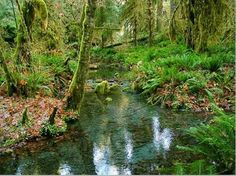 Olympic National Park..my neck of the woods