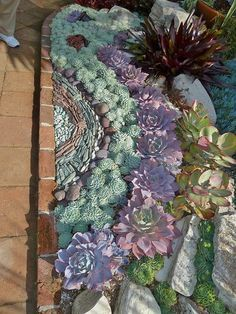 Create a mosaic made from succulents along side a pathway or for the planter under the a window Succulent edging.