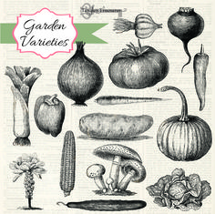 Check out Vintage Vegetables Brushes by Tangle's Treasures on Creative Market