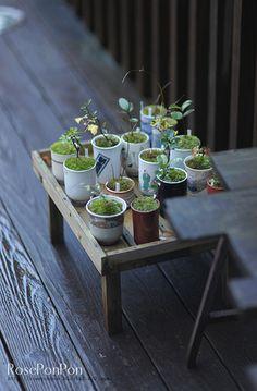 Lawn and Garden Tools Basics Naraya Cafe Pots Encontrado En Indoor Garden, Indoor Plants, Mame Bonsai, Moss Garden, Succulent Gardening, Miniature Plants, Japanese Flowers, Small Trees, Ikebana