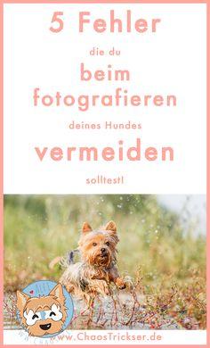 5 Fehler in der Hundefotografie
