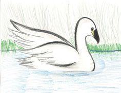 The 2013 Florida Junior Duck Stamp of Adrian Santiago Jr., honorable mention in Group 2, grades 4-6. DDWS photo
