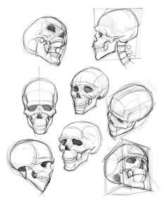 Anatomy drawing, drawings ve anatomy art. Human Anatomy Drawing, Human Figure Drawing, Figure Drawing Reference, Art Reference Poses, Anatomy Reference, Figure Drawing Tutorial, Drawing Practice, Skeleton Drawings, Cool Skull Drawings