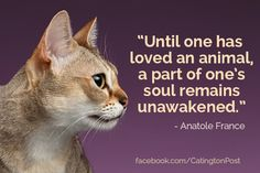 Until one has loved an animal, a part of one's sould remains unawakened. CatingtonPost.com Animal Lover Quotes, Cat Quotes, Foster Kittens, Cats And Kittens, Anatole France, Cat 2, Cat Memes, Cat Lady, Fur Babies