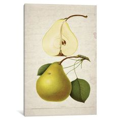 iCanvas Pears II Gallery Wrapped Canvas Art Print by Natasha Westcoat