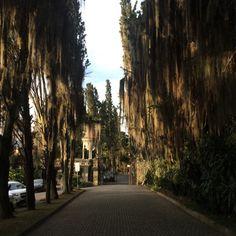 Museo el castillo , medellin♪ Up here in my tree.... ♪