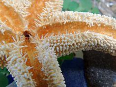 STAR FISH ON BEACH GLASS KIMBERLY PERRY