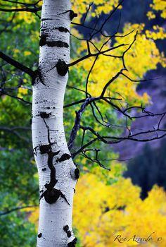Near Aspen, Colorado; photo by Ron Azevedo