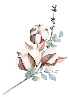 Popular and Trending flower Stickers on PicsArt - Beauty flowers Illustration Noel, Watercolor Illustration, Watercolor Flowers, Watercolor Paintings, Watercolor Portraits, Watercolor Landscape, Abstract Paintings, Botanical Prints, Picsart