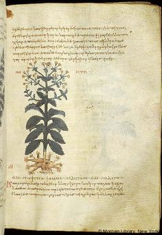 De materia medica, MS M.652 fol. 134r - Images from Medieval and Renaissance Manuscripts - The Morgan Library & Museum