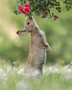 Wild Rabbit by JulianRad shallow pools Cute Little Animals, Cute Funny Animals, Nature Animals, Animals And Pets, Wildlife Nature, Beautiful Creatures, Animals Beautiful, Wild Rabbit, Bunny Rabbit