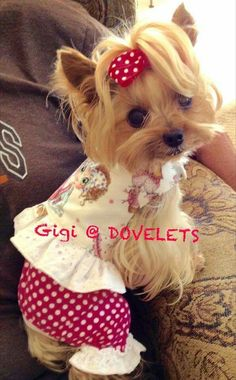 Gigi Dovelet owned by Penny Rubenstein Dove