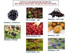 vitamin b17 | Vitamin B17 - Terapi Alternatif Untuk Kanser / Barah