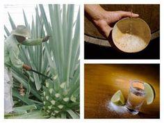 Bebida que día a día atrapa los paladares de los mexicanos, un destilado milenario y artesanal que no hay que olvidar en nuestras celeb...
