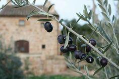 #black olives