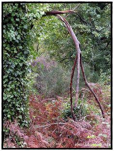 El Bosque animado, via Flickr.