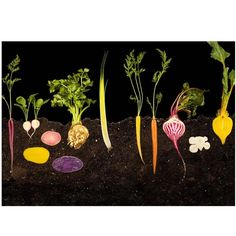 Photo by Ryan Matthew Smith: Root Vegetables, from Modernist Cuisine: The Art and Science of Cooking or quilted wall hanging idea