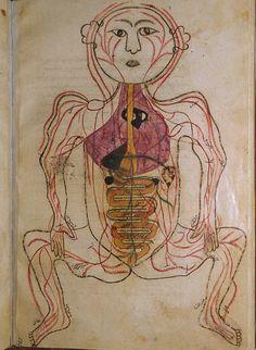 Click on image to view this book    Author: Mansur ibn Ilyas (fl. ca. 1390).    Title: Tashrih-i badan-i insan. [Anatomy of the Human Body].