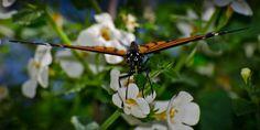 Monarch Butterfly 02 by Dretography.deviantart.com on @deviantART