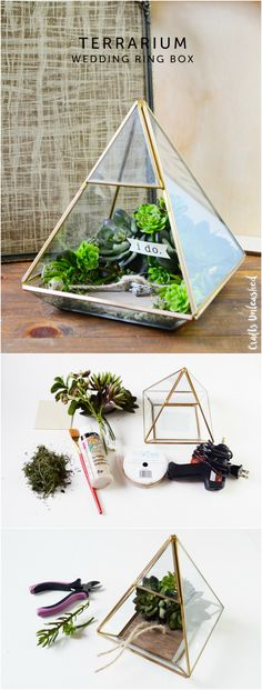 terrarium comment faire un terrarium terraria. Black Bedroom Furniture Sets. Home Design Ideas