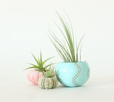 Teeny Tiny Air Plant Planter Trio with Air Plants  -  Pink, Aqua, Gold.