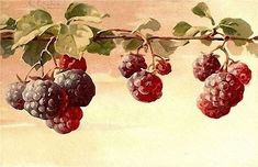 Un articolo di Dindi Se parliamo di rose, di fiori in generale, frutta, uccellini, non possiamo dimenticare l'artista Ca...