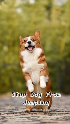 Stop Dog From Jumping Guide training your dog hundetraining come dog training ideas dog stuff training dogs training tips training a dog . Dog Training Near Me, Dog Training Treats, Dog Training Techniques, Dog Training Videos, Funny Dog Faces, Funny Dogs, Dog Growling, Funny Dog Pictures, Dog Care