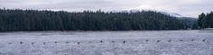ITAP of 18 Ducks. http://ift.tt/2lBltlD