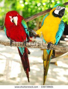 Two beautiful carribean maccaws on exotic beach at Saona island, Dominican Republic - stock photo Jamaican Restaurant, Saona Island, Exotic Beaches, French Polynesia, Luxury Travel, Caribbean, Royalty Free Stock Photos, Islands, Cats