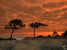 Two Trees, Ville France, Parasols, Seaside Resort, Le Havre, Beautiful Sunset, Provence, Mother Nature, Woodland