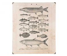 Main Thumb Vintage World Maps, Fish, Pisces