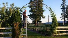 This is brilliant. My brother built this arch out of the frame of an old trampoline his family had lying around and is training a hop vine. Cedar Pergola, Outdoor Pergola, Wooden Pergola, Backyard Pergola, Pergola Plans, Pergola Kits, Backyard Landscaping, Pergola Ideas, Pergola Carport