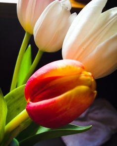 The Adventures of Kathryn: Just a Few Snaps #Tulips #PrettyFlowers
